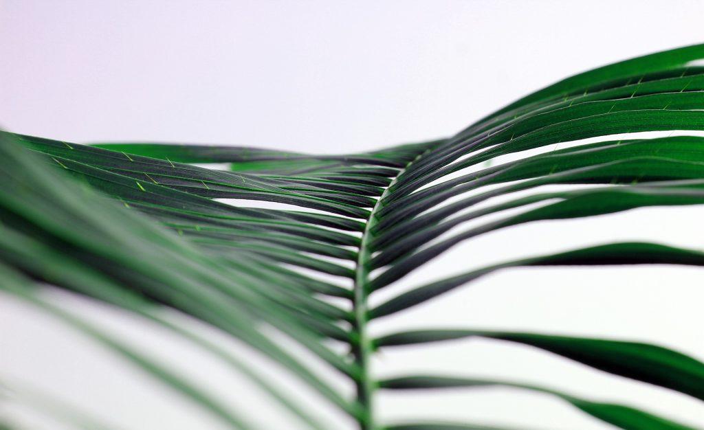 Blatt Palme grün Farn